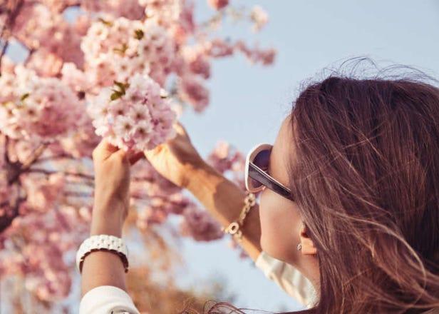 5 Foreign Residents Share Inside Tips & Favorite Sakura Spots in Tokyo