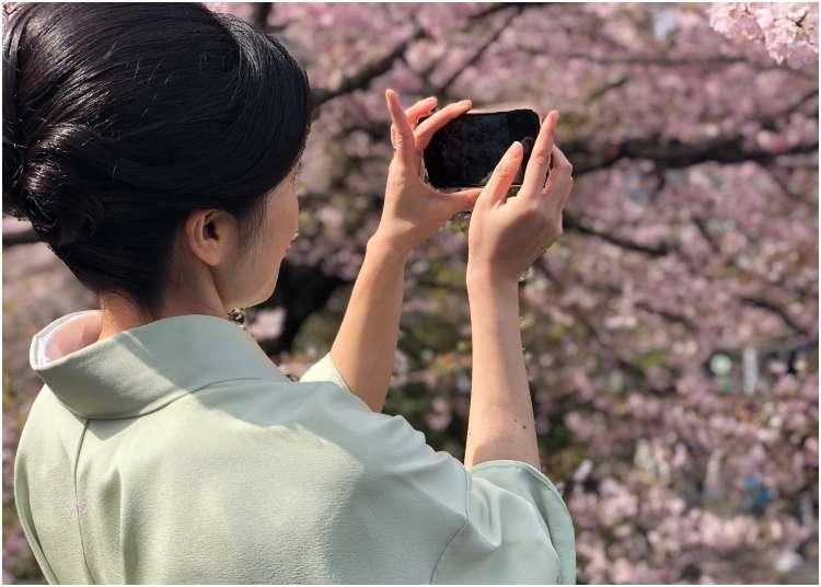 """2019 일본 벚꽃 - """" 도쿄 주요 벚꽃명소의 지금 상황은 어떨까?"""" 벚꽃개화 상황을 조사!"""
