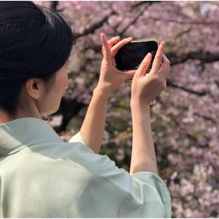 Tokyo's Cherry Blossom Festival Season in Photos!