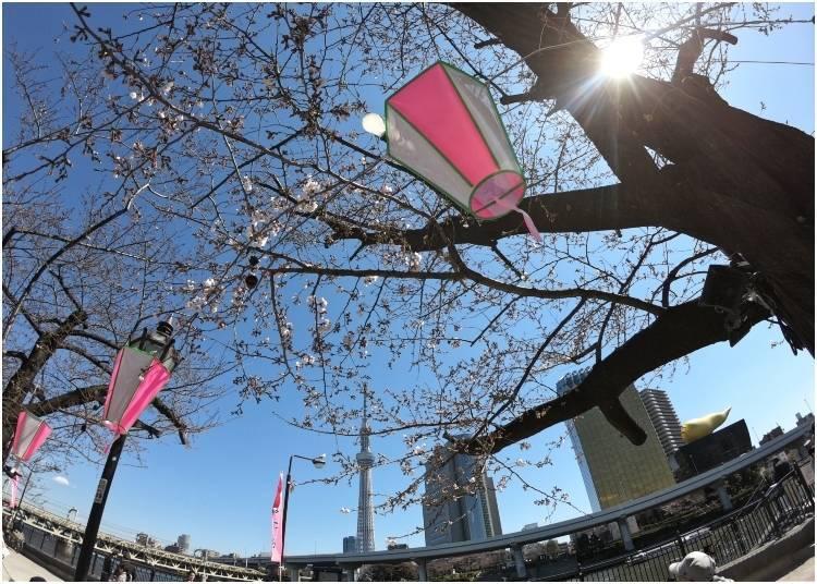 4. 아사쿠사 - 스미다 공원의 벚꽃