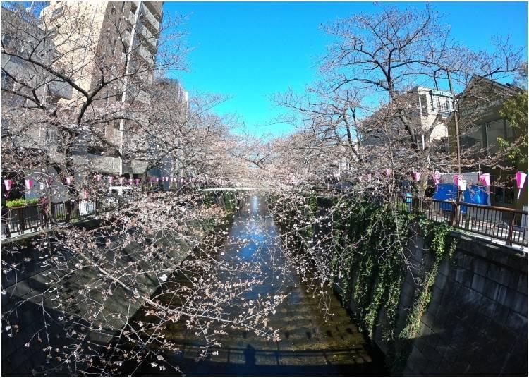1. 나카 메구로 : 일본의 벚꽃 축제로 완벽한 장소!