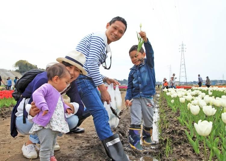 Enjoy the 2020 Sakura Tulip Festa at Sakura Furusato Square!