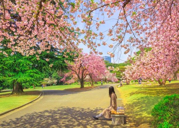 ■「既然是觀光就必須看看日本的自然風景!」這樣的英國男性推薦的地方是?