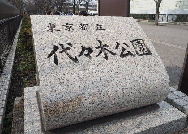 渋谷の癒しスポット!代々木公園