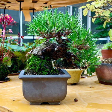 Bonsai Facility Ueno Green Club