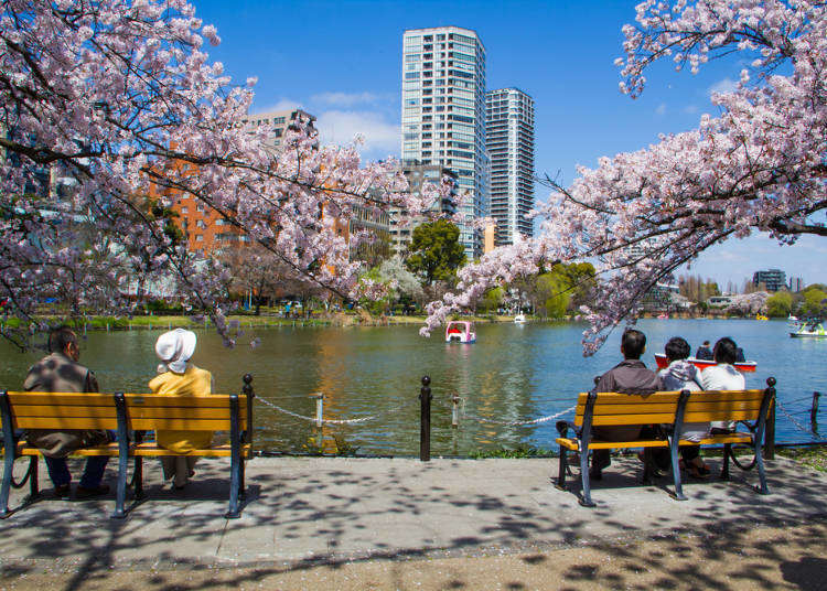 Tokyo Ueno Park Complete Seasonal Flowers Guide: Where to see Cherry Blossoms, Lotus and More!