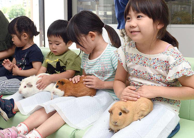 【上野动物园完全指南】人气亮点&美食、伴手礼及服务信息大解析