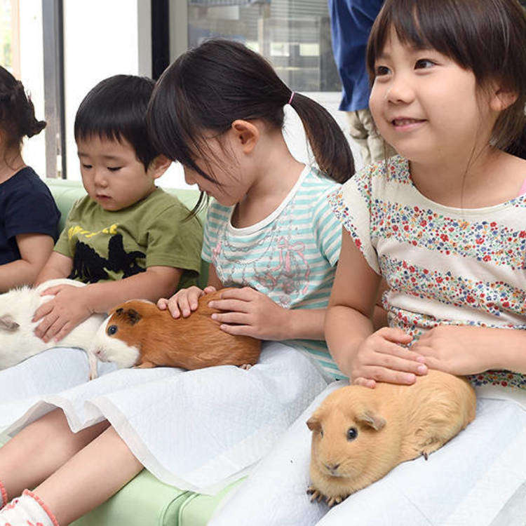 The Perfect Guide to Ueno Zoo: Popular Attractions and Services