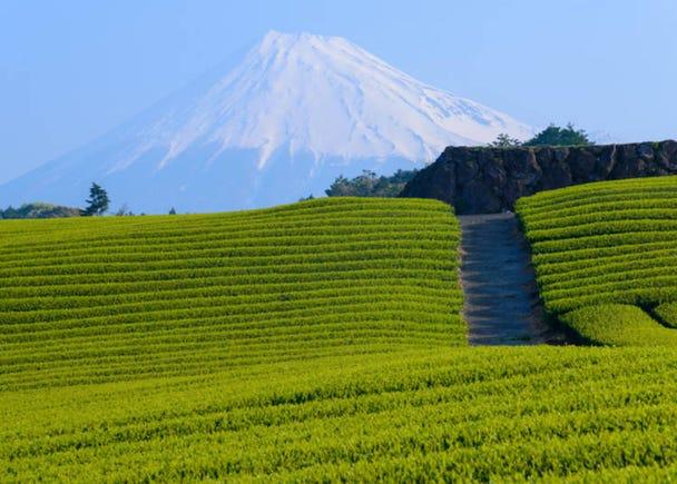 2. Enjoy soothing green tea plantations