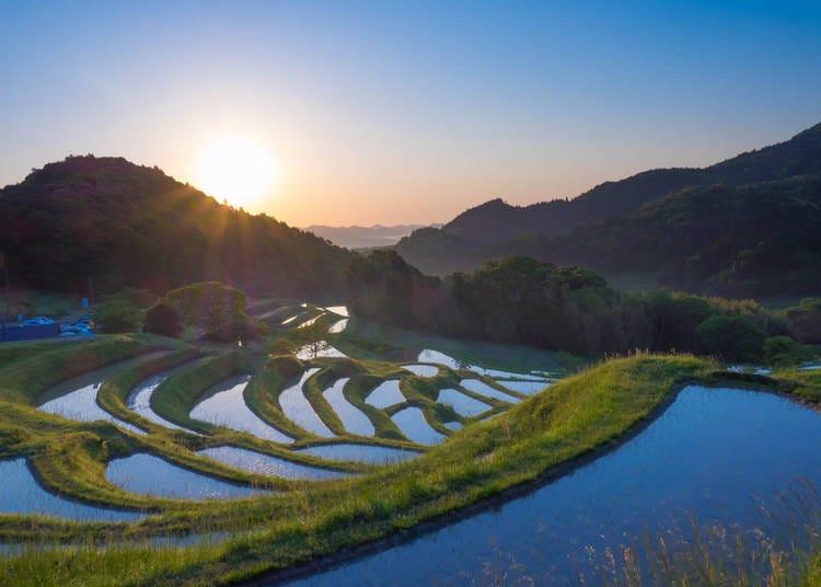 5. Visit the rice paddies