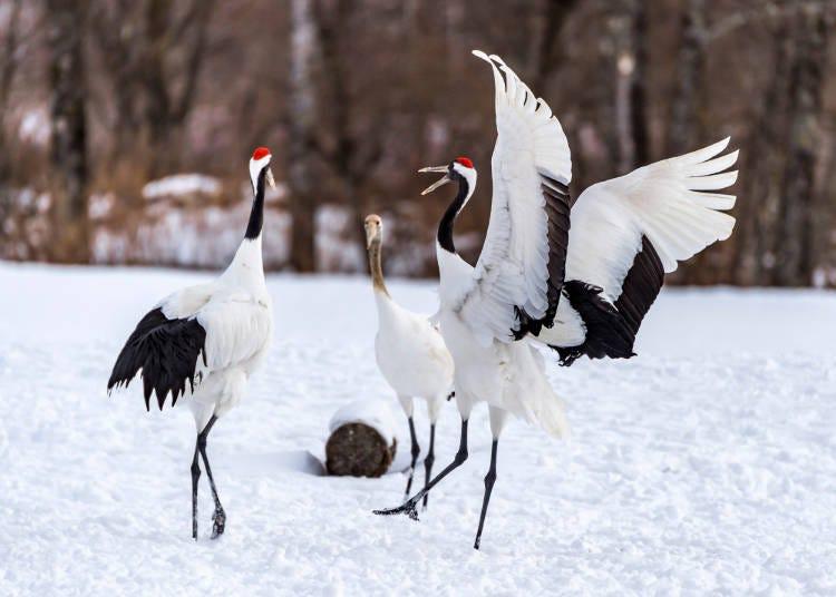 日本に来た外国人が見たいのは、日本固有の動物たち!