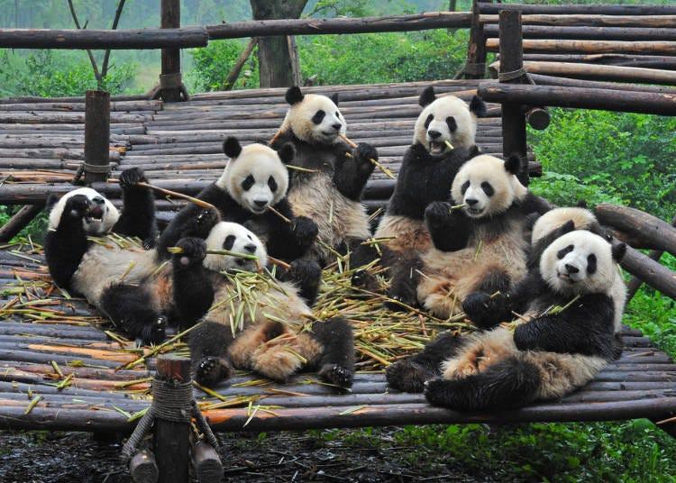 やっぱり日本人はパンダが好き!!