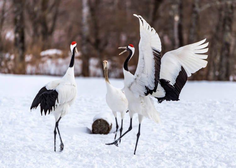 遊訪日本的外國人想看的是日本固有的動物們!