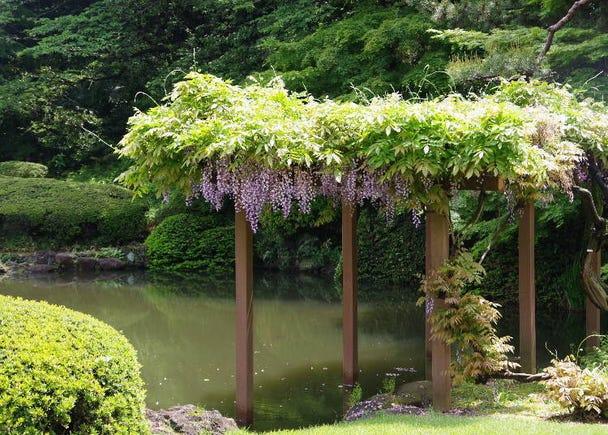 新宿御苑人氣的原因2:能欣賞到日本四季的花卉美景