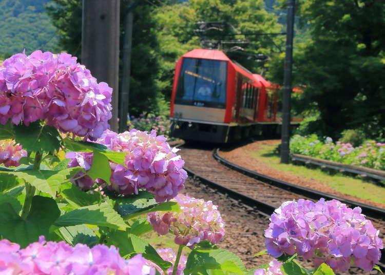 '하코네' 가이드의 완결판! 도쿄에서 1시간이면 도착하는 리조트 지역 하코네의 매력.
