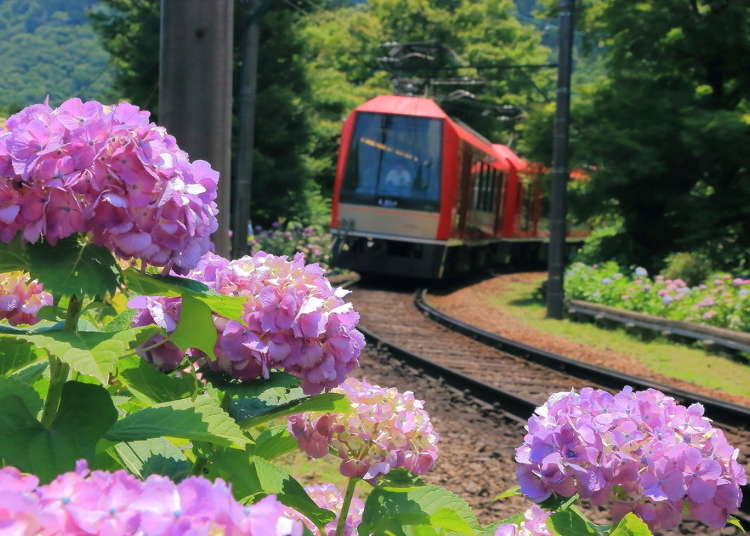 Complete Hakone Area Guide: Onsen Baths, Scenic Lake Scenery & Mount Fuji Views! - LIVE JAPAN
