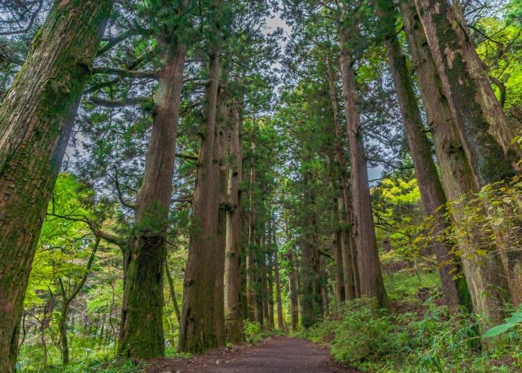 ●Kyukaido Area, Where You Can Feel the Remnant of Edo Period