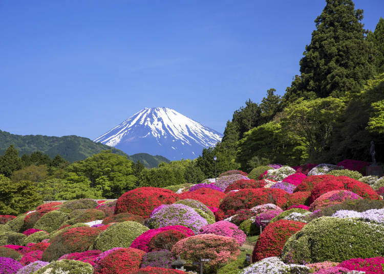 ●Hakone in Spring: Great View of Cherry Blossoms and Azaleas