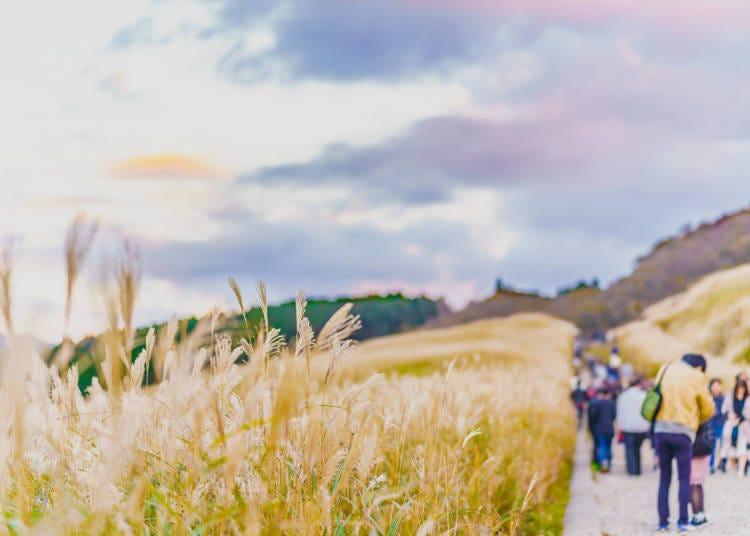 ●自然とアートを満喫できる「仙石原」