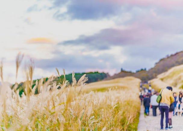 「箱根」分區攻略:成為童話舞台的大自然以及特色美術館「仙石原」