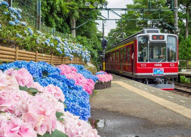 箱根之夏:繡球花與電車、繁華煙火祭典