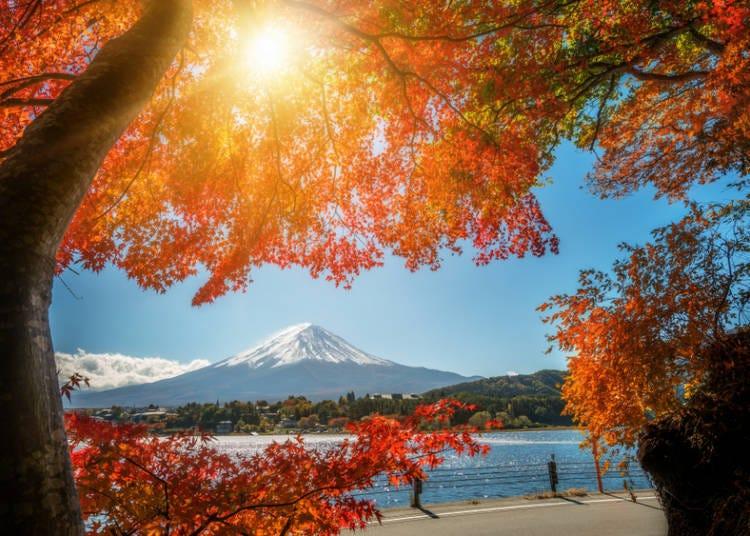 ●芒草與美麗楓葉、涼爽宜人氣溫之季「秋」