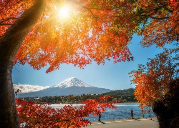 箱根之秋:芒草與美麗楓葉、涼爽宜人氣溫