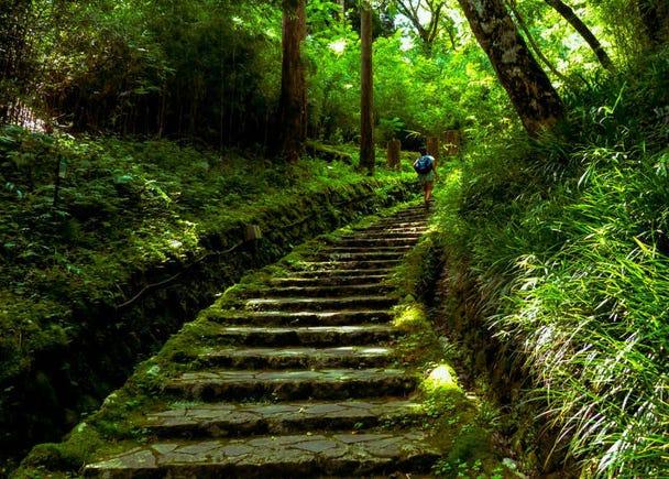 箱根必訪的理由⑫:可以體驗箱根獨有的規劃完整健行路線並享受大自然美麗景色