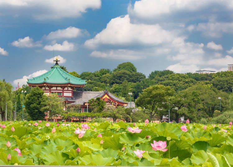 日本東京也有這種絕景?細數令人難忘的東京美點