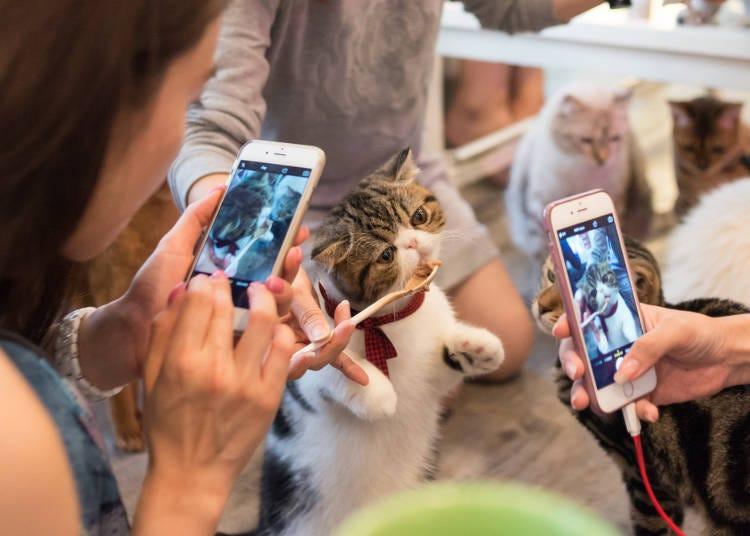 中でも「動物カフェ」がダントツの人気でした!