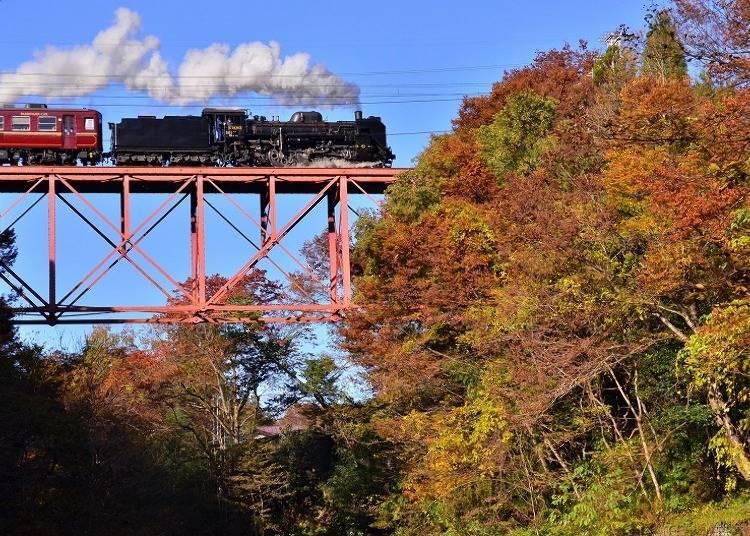 秋季:红叶之美让SL列车更加耀眼的「SL PALEO Express」