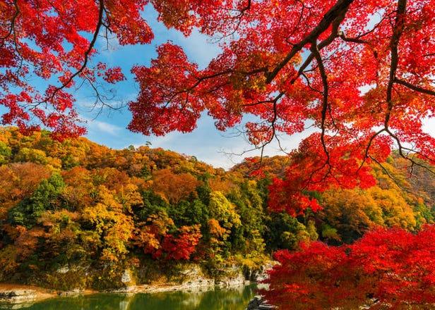自然、溪谷、风景、神社、美食一应俱全!秩父长瀞满载而归玩好玩满一日游