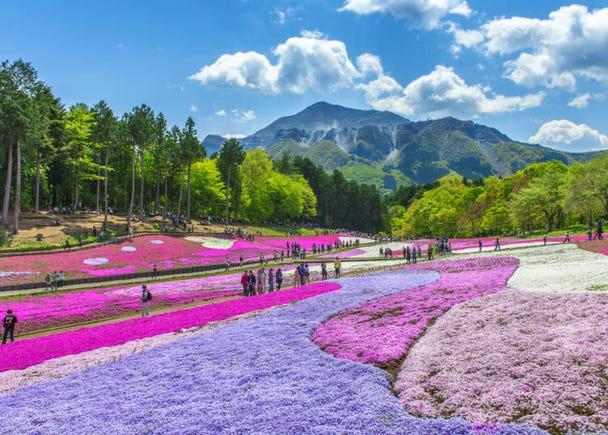 ●Enjoy some leisure with the Chichibu / Nagatoro Outing Ticket (Chichibu Railway)