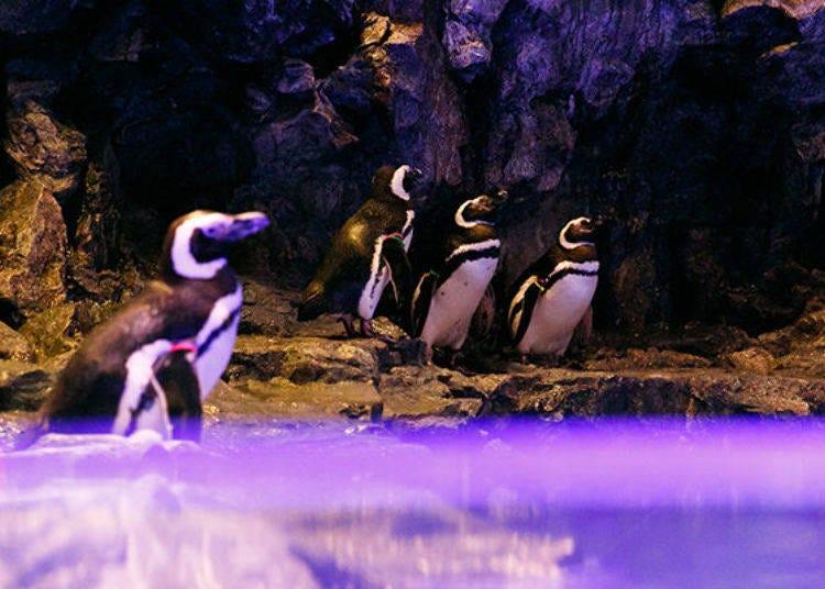 Sumida Aquarium, an Urban Oasis for a Leisurely Evening