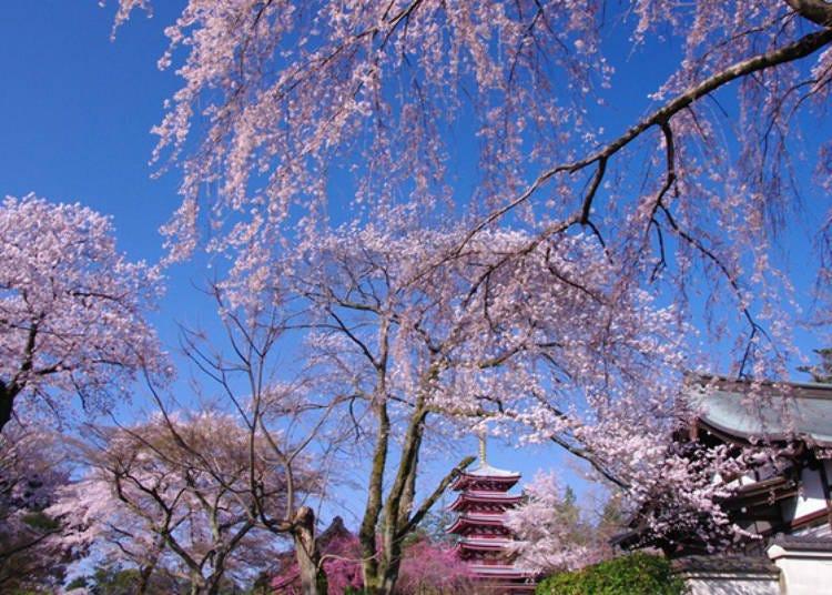 Hondoji Temple: A Chiba sightseeing attraction that's beautiful in each season