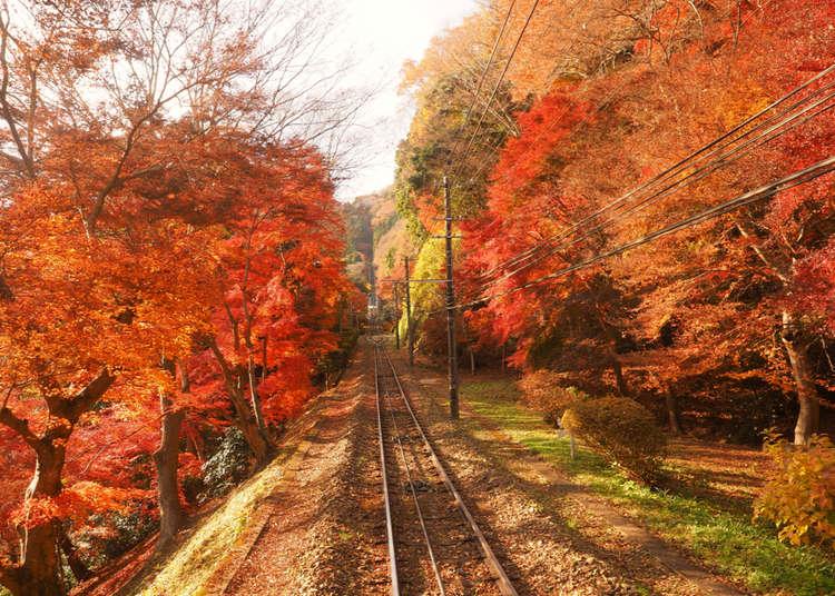 距离东京最近的自然景点!高尾山攻略导览&推荐观光美食景点