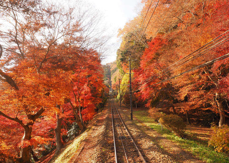 Tokyo's Mt. Takao: 15 reasons why it's a must-visit spot when visiting Japan!