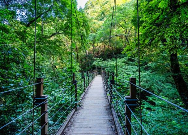 【理由5】自由に選べる9つのハイキングコース