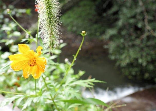 【理由9】種類豊富な植物・動物・昆虫と出会える