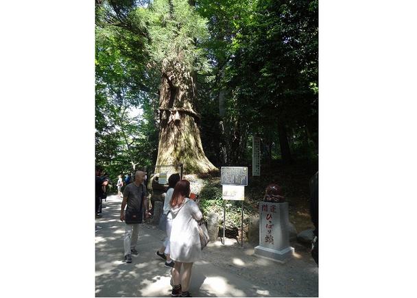 [Summer] Takosugi: A power spot for receiving good luck and blessings