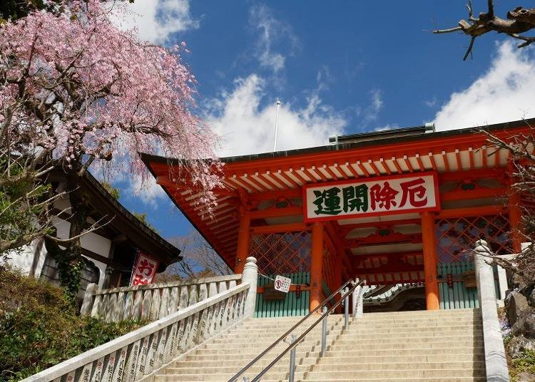 """【ฤดูใบไม้ผลิ】""""วัดทาคาโอะซังยาคุโออิน"""" อันเก่าแก่กับดอกซากุระที่เบ่งบานอย่างงดงาม"""