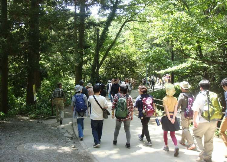 Mount Takao Ultimate Guide 2019: Climbing Courses From Beginner to Expert! - LIVE JAPAN