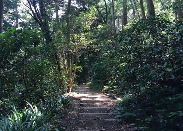 (Intermediate) Trail 3: Trek in peace at your leisure