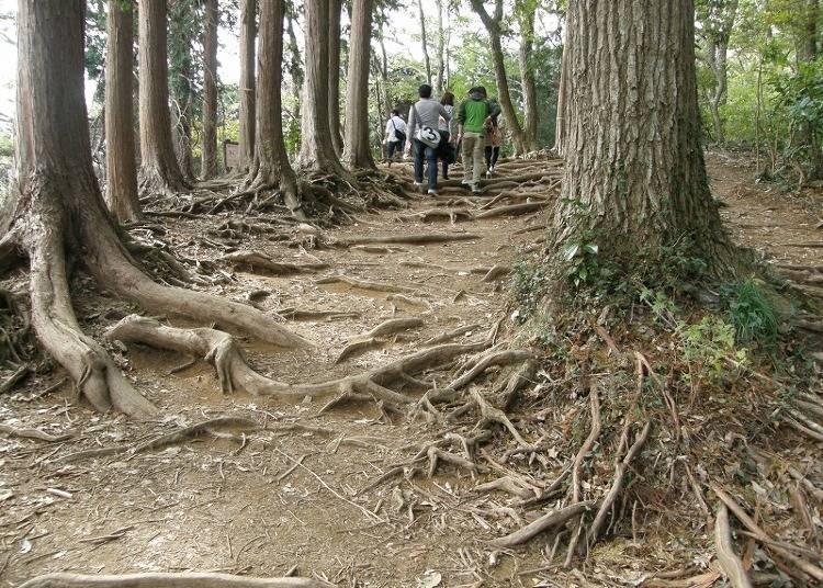 【上級者】見晴らしの良い「稲荷山コース」