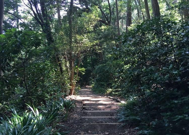 [다카오산 등산 중급자 코스] 여유롭게 조용히 걸을 수 있는 '3호길'
