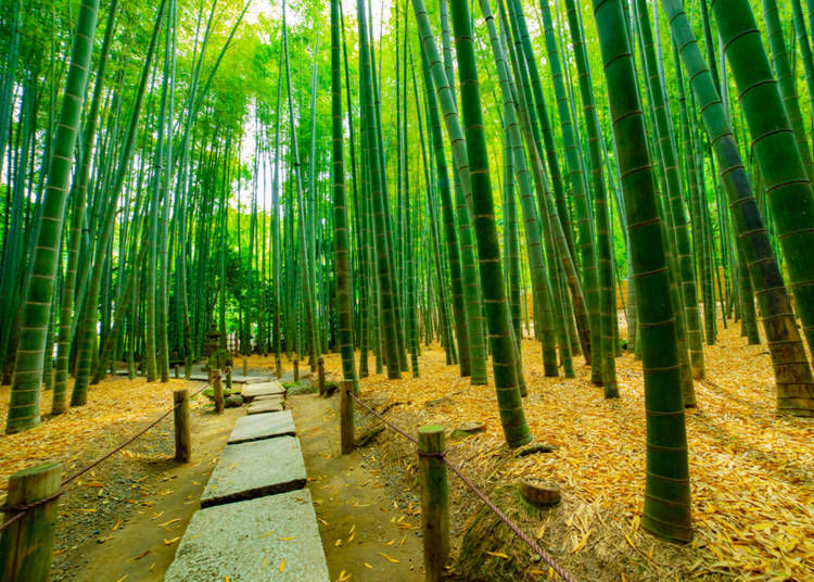 9:30 am: Walk to Hokokuji Temple and Bamboo Forest