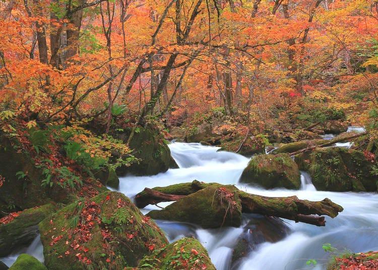7. Oirase Keiryu Mountain Stream (Aomori)