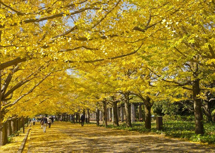 23. Showa Memorial Park (Tokyo)