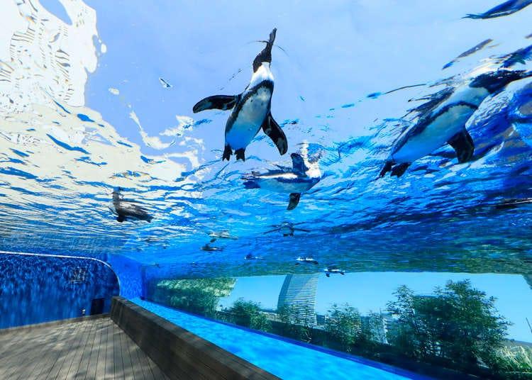 ซันไชน์ซิตี้ อิเคะบุคุโระ ไม่ได้มีแค่พิพิธภัณฑ์สัตว์น้ำ! แนะนำสถานที่ยอดนิยมแบบเจาะลึก