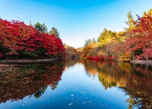 秋天就是要到輕井澤賞楓!輕井澤楓葉景點&推薦商家設施